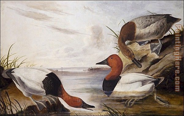 John James Audubon Canvasback Duck